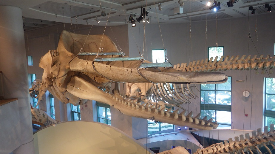 North Carolina Museum of Natural Sciences, Downtown, Raleigh